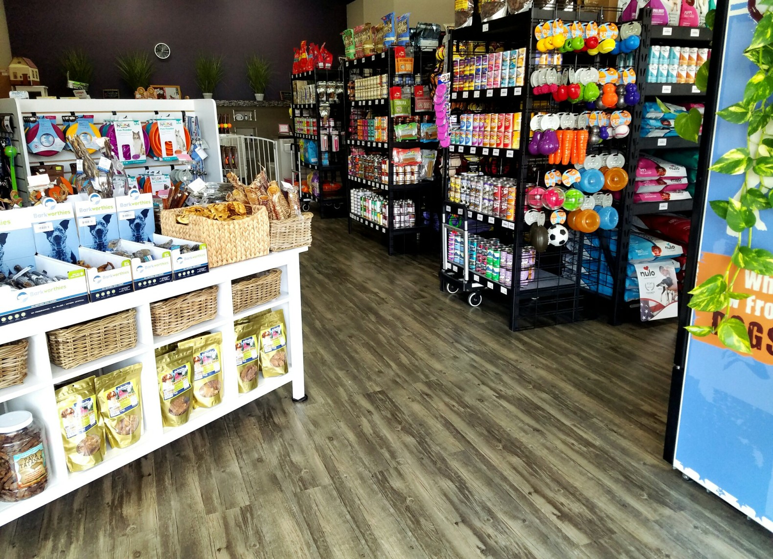 Cats & Dogs Supplies